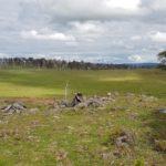 Cattle Hill Wind Farm site area